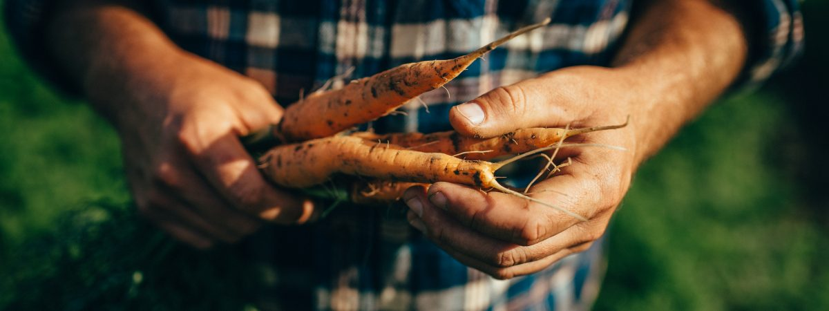 Cultivating Organic Produce